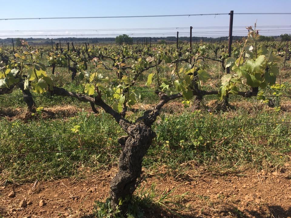 Aymeric-et-Jordan-Amiel-Languedoc-Roussillon-34290-Montblanc