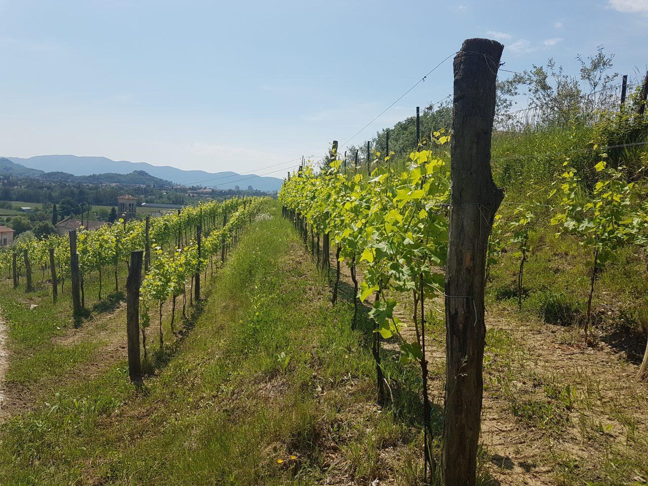 Dario-Princic-Italie-34170-Gorizia