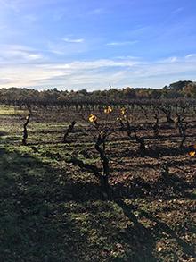 Mont-de-Marie-Thierry-Forestier-Languedoc-Roussillon30250-Souvignargues