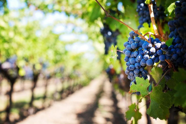 Le Vin Biodynamique