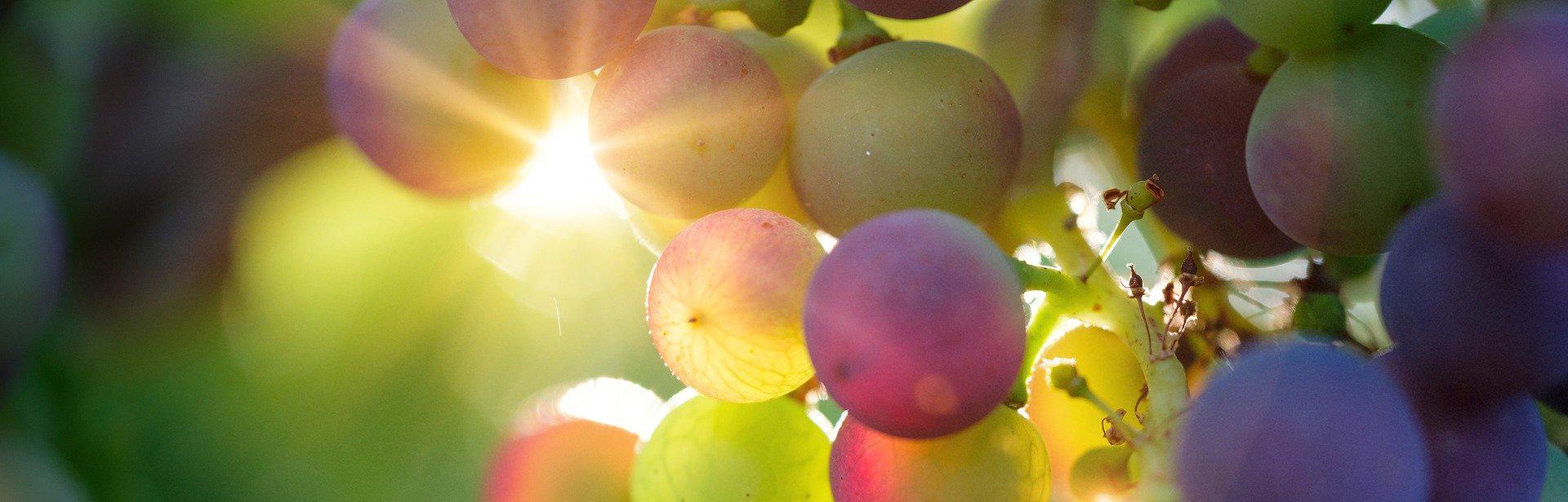 Des vignes qui sentent bon le naturel