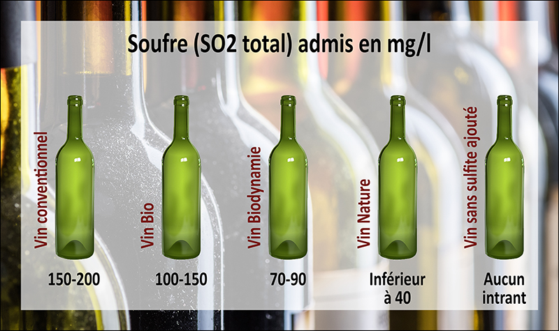 Le Vin : jus de raisin fermenté